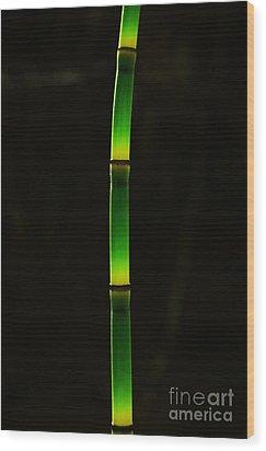 Horsetail  Wood Print