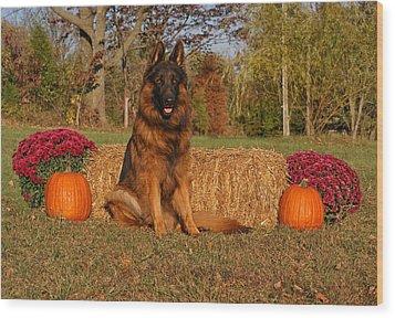 Hoss In Autumn II Wood Print by Sandy Keeton