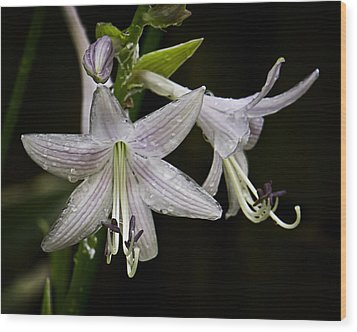 Hosta Front And Center Wood Print by Michael Putnam