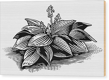 Hosta, Lino Print Wood Print by Gary Hincks