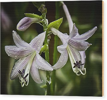 Hosta Makes Three Wood Print by Michael Putnam