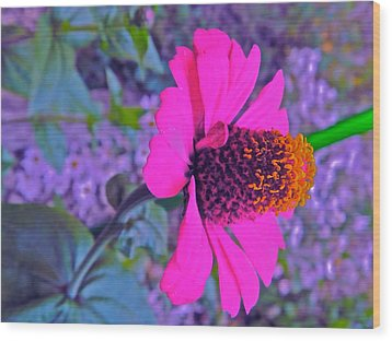 Hot In Pink Wood Print by Randy Rosenberger