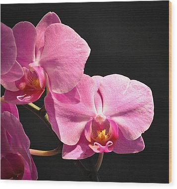 Wood Print featuring the photograph Hot Pink Orchids by Ronda Broatch