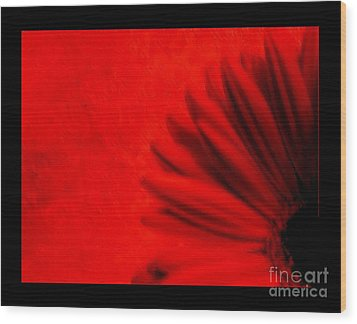 Hot Red Gerber Daisy Wood Print by Marsha Heiken