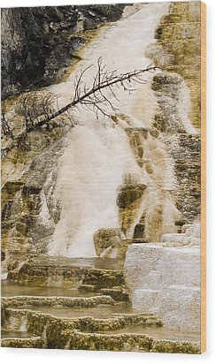 Wood Print featuring the photograph Hot Spring Pine by J L Woody Wooden