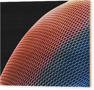 Hover Fly Eye, Sem Wood Print by Susumu Nishinaga