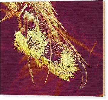 Hover Fly Foot, Sem Wood Print by Susumu Nishinaga