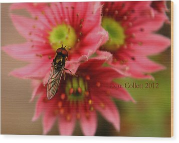 Hover Fly II Wood Print by Jacqui Collett