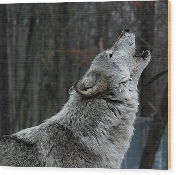 Howling Tundra Wolf Wood Print by Richard Bryce and Family