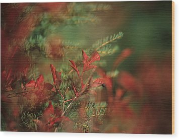 Huckleberry Leaves In Fall Color Wood Print by One Rude Dawg Orcutt