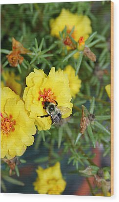 Wood Print featuring the photograph Hugging The Flower by Paula Tohline Calhoun
