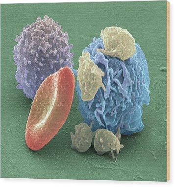 Human Blood Cells, Sem Wood Print by Steve Gschmeissner