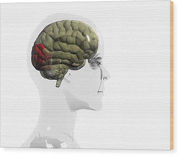 Human Brain, Occipital Lobe Wood Print by Christian Darkin