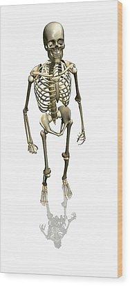 Human Skeleton, Artwork Wood Print by Friedrich Saurer