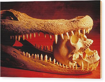 Human Skull  Alligator Skull Wood Print by Garry Gay