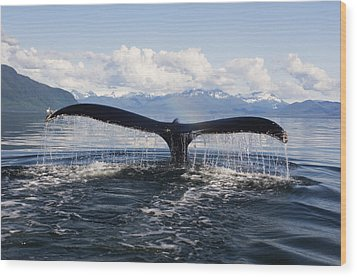 Humback Whale Diving With Tail Flukes Wood Print by James Forte