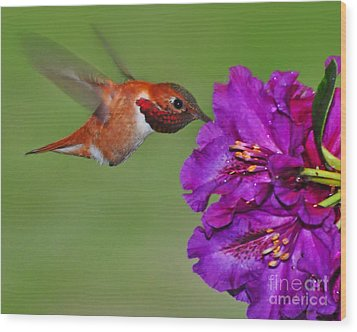 Wood Print featuring the photograph Hummer N Blooms by Jack Moskovita