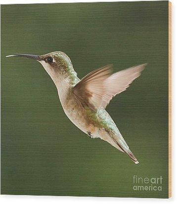 Hummingbird 1 Wood Print by Lori Whalen