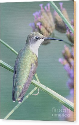 Hummingbird At Rest Wood Print by Robert E Alter Reflections of Infinity