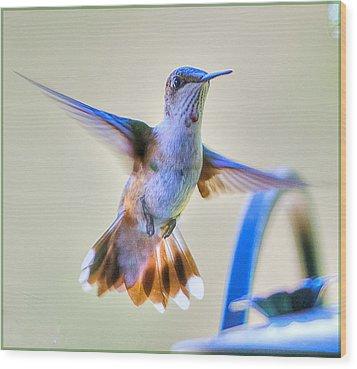 Hummingbird At The Feeder Wood Print by Shirley Tinkham