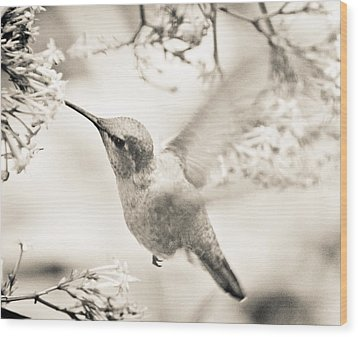 Wood Print featuring the photograph Hummingbird At The Valerian by Ronda Broatch