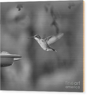 Hummingbird  Black And White Wood Print by Donna Brown