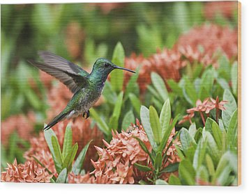 Hummingbird Flying Over Red Flowers Wood Print by Craig Lapsley