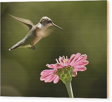 Hummingbird Wood Print by Jody Trappe Photography