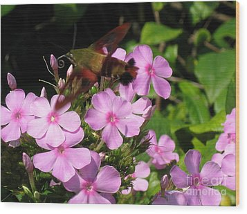 Wood Print featuring the photograph Hummingbird Moth  by Nancy Patterson