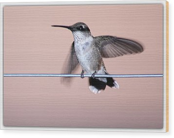 Hummingbird On A Wire Wood Print by Wind Home Photography