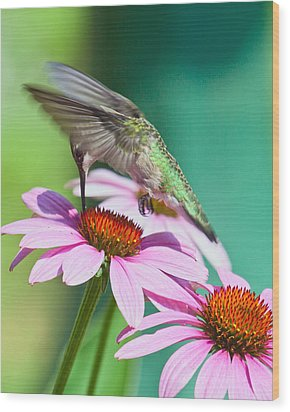 Wood Print featuring the photograph Hummingbird On Coneflower by Susi Stroud