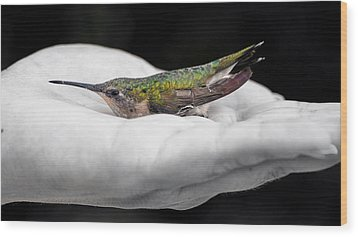 Hummingbird Rescue Wood Print by Bill Tiepelman