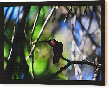 Wood Print featuring the photograph Hummingbird Resting On A Twig by Susanne Still