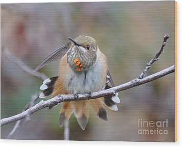 Hummingbird Stretch Two Wood Print by Suzanne Handel