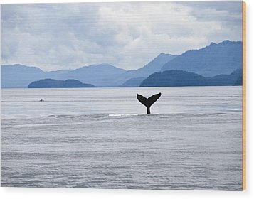 Humpback Whale Megaptera Novaeangliae Wood Print by James Forte
