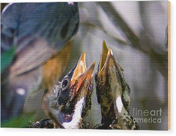 Hungry Baby Robins Wood Print by Terry Elniski