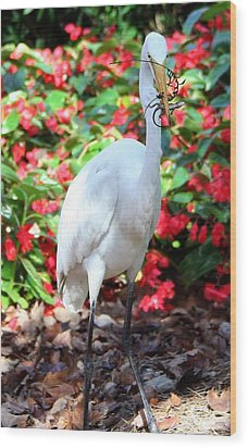 Hungry Egret  Wood Print