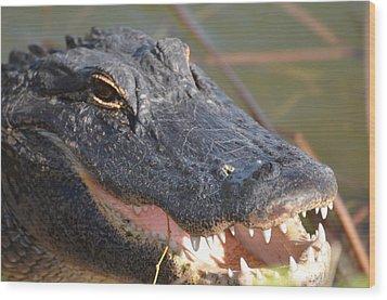Hungry Gator Wood Print by Susan McNamara