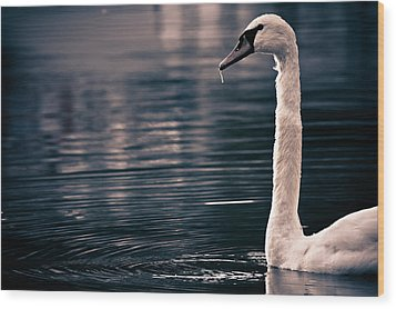 Wood Print featuring the photograph Hungry Swan by Justin Albrecht