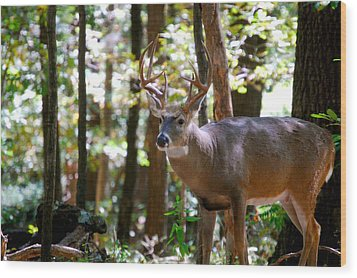 Wood Print featuring the photograph Hunters Dream 10 Point Buck by Peggy Franz