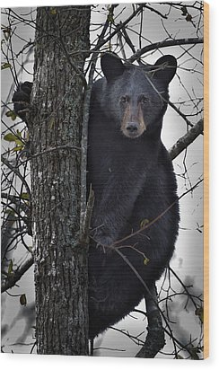 Hunting Berries Wood Print