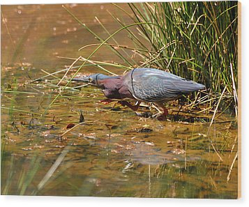 Hunting Green Heron - C9822b Wood Print by Paul Lyndon Phillips