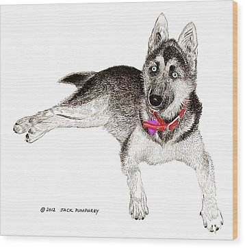 Husky With Blue Eyes And Red Collar Wood Print by Jack Pumphrey