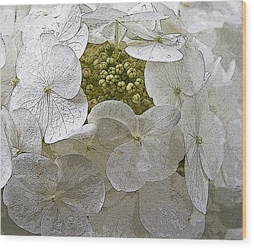 Wood Print featuring the photograph Hydrangea by Michael Friedman