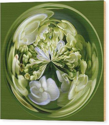 Hydrangea Orb Wood Print