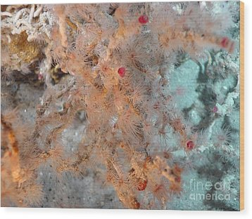 Hydrothermal Vent Tubeworms Wood Print by Science Source