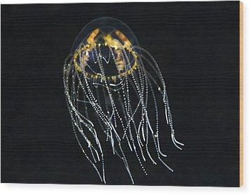 Hydrozoan Medusa Wood Print by Alexander Semenov