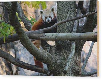 I Will Call Him Red Wood Print by Jenna Mackay