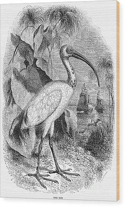 Ibis Wood Print by Granger