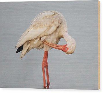 Ibis Preening Wood Print by Paulette Thomas